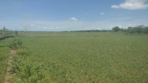 Buy Agricultural land in Uthukottai-1 Acre to 6 Acres