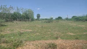 Buy Agricultural land in Uthukottai