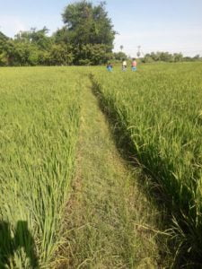 Cheap Agriculture land in Madurantakam