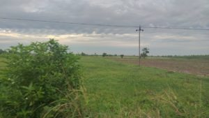 Mango farm for sale in near Thiruvallur