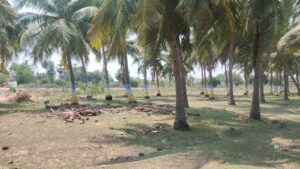 Commercial land for sale in Minjur Chennai4 300x169
